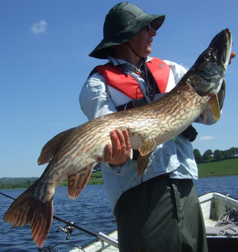 3 Pike 108cm 21lbs