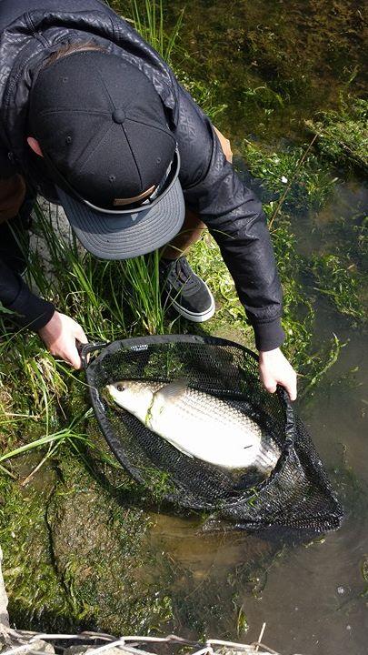 Un fantastico pesce di 66 cm.stimato 4 chili, con un grande dorso.