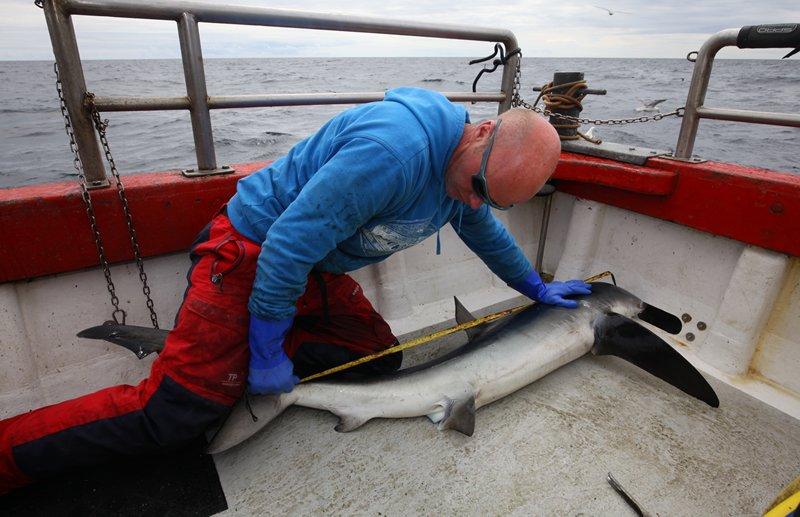 Diversi pesci misurati e taggati