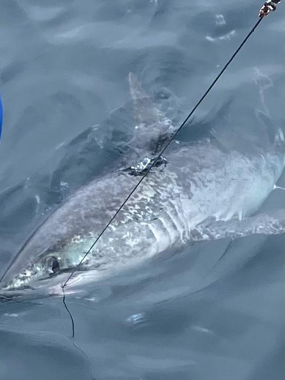 Che squalo è?