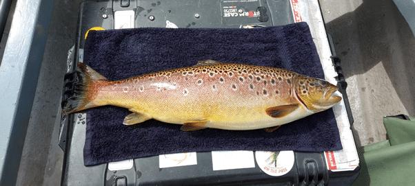 Bel pesce di 5 libbre per Michael Monaghan in Castlehill Bay, Lough Conn, rilasciato